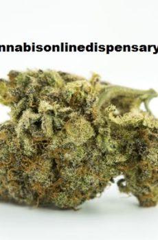 Blackberry Marijuana Strain