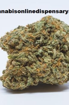 Blue Cheese Marijuana Strain