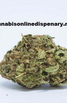 Blueberry Marijuana Strain