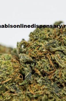Green Crack Marijuana Strain