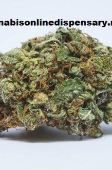 Purple Kush Marijuana Strain