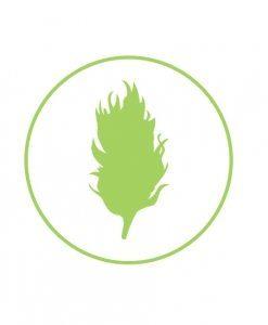 sativa-buy-marijuana-online