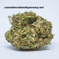 Agent Orange Marijuana Strain