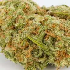 Dutch Treat Marijuana Strain