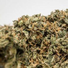 Fire OG Marijuana Strain