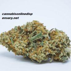Golden Goat Marijuana Strain