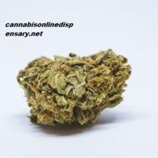 Platinum Girl Scout Cookies Marijuana Strain