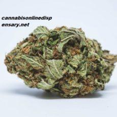 Tahoe OG Kush Marijuana Strain