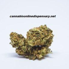 Tangie Marijuana Strain