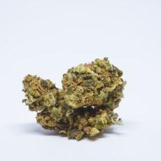 Laughing Buddha Marijuana Strain