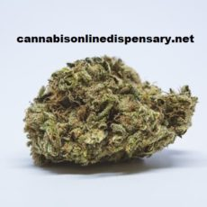 Lemon Haze Marijuana Strain