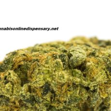 Lemon Skunk Marijuana Strain, lemon skunk strain