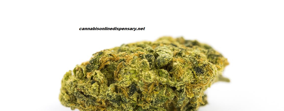 Lemon Skunk Marijuana Strain