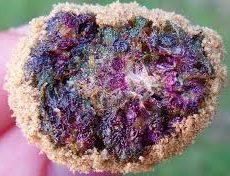 Purple Moon Rock