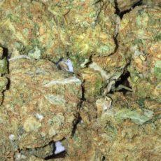 Haze, Haze Marijuana Strain