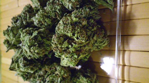 Shishkaberry, Shishkaberry Marijuana Strain