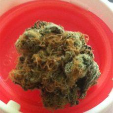 Thai, Thai Marijuana Strain