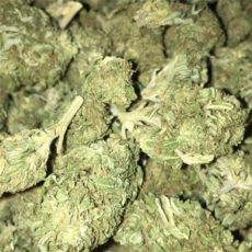 Berry White Marijuana Strain